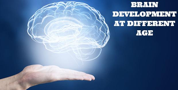 Brain Development At Different Age